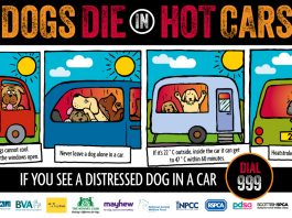 dogs in hot car