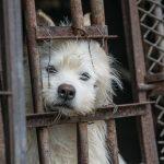 South Korea Dog Meat Farm (Farm 12)
