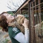 South Korea Dog Meat Farm Rescue (Farm 12)