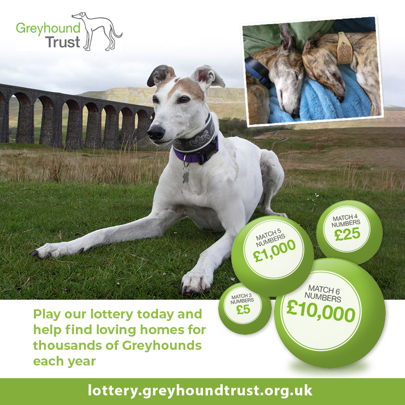 Greyhound Trust Lottery