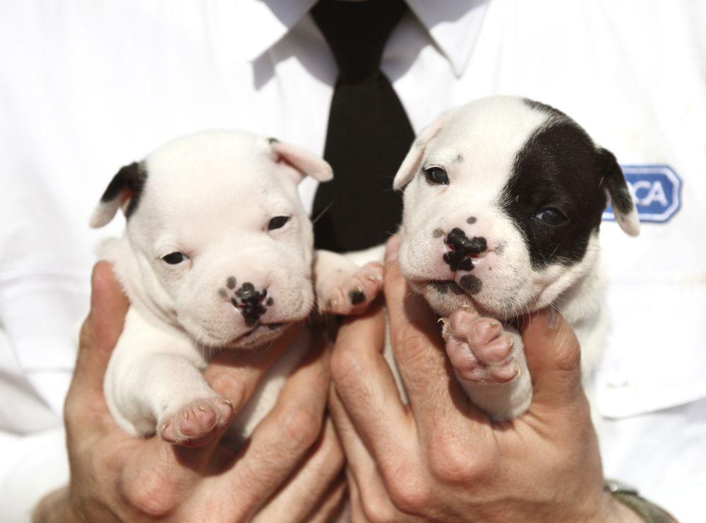 puppy farm pups