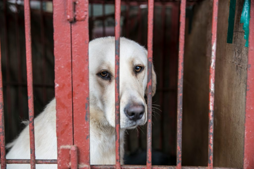 dog meat trade victim