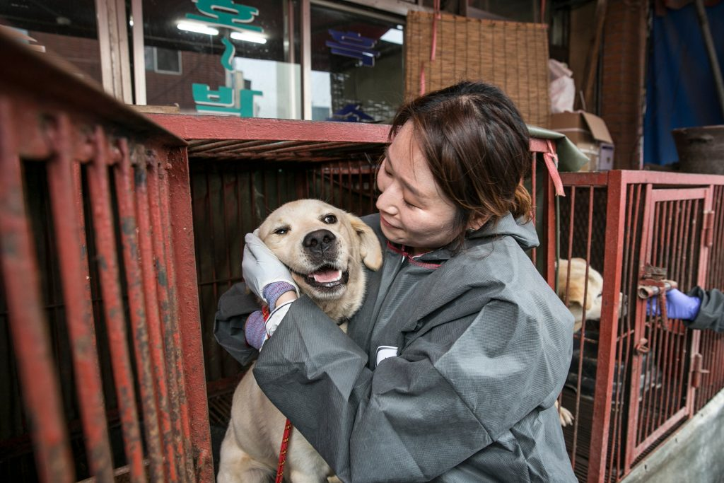 rescued from dog meat market