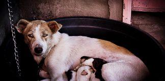 charities welcome the animal welfare action plan