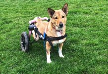 disabled rescue Ella