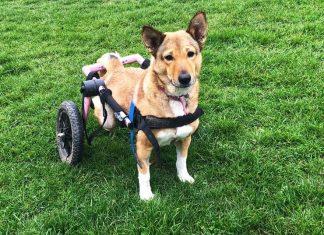 disabled rescue Ella
