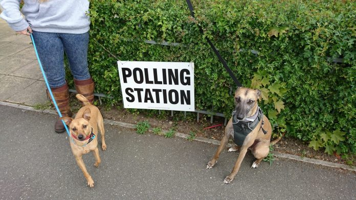 dogs at polling station