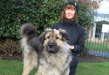 oscar the caucasian shepherd