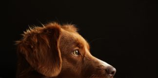 pet abduction law to be introduced