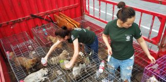 Shenzhen might ban dog meat