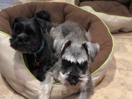 Lucky and Flossie