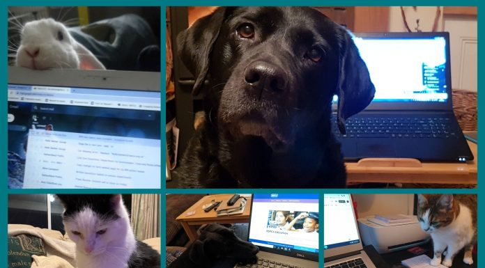 lockdown home-working with dogs