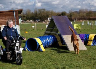 Trixia competing in agility