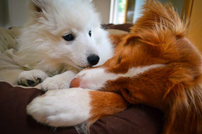 puppies socialise