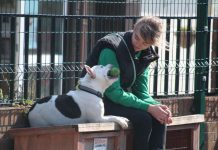 animal welfare time bomb as rescues struggle