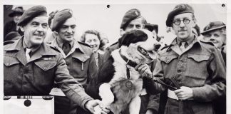 hero animals honoured on VE Day