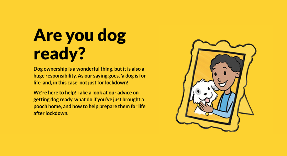 Dog ready quiz
