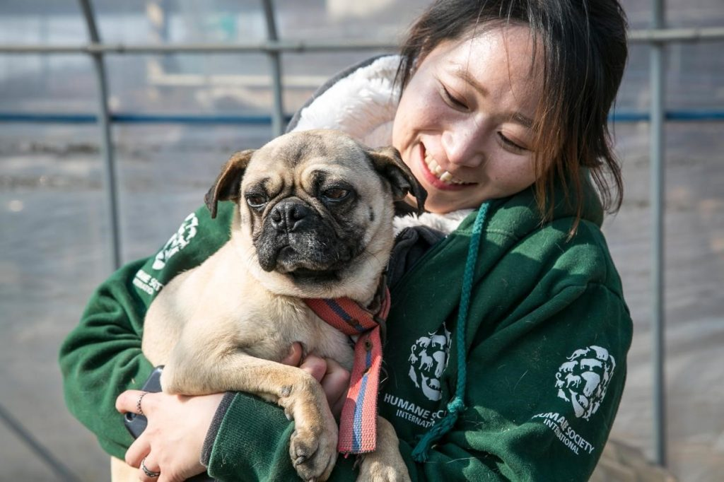 dog rescued from korean dog meat farm