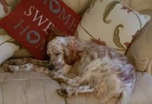 Settusfree rescue dog settles in new home