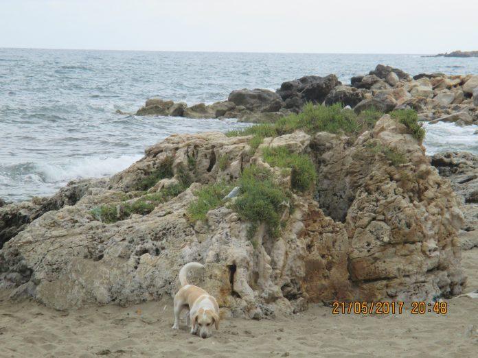 pokio goes to the beach
