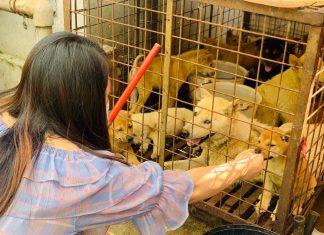 Yulin rescue
