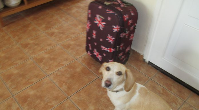 Pokio goes on holiday