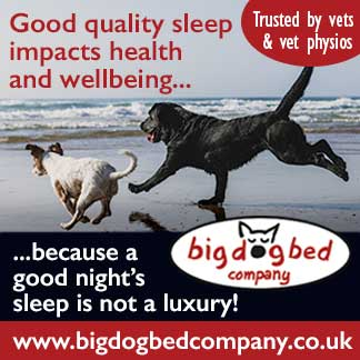 Big Dog Bed Co