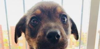 puppy Vincente