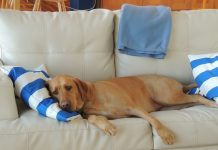 renters often face a heartbreaking choice - the home or the dog