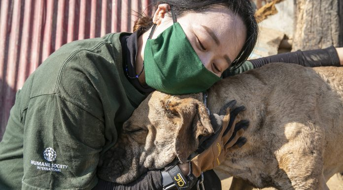The majority of South Koreans consider dogs pets