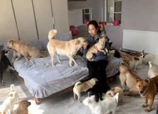 Fita with Furry Angels Haven Wuhan rescues