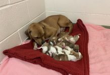 puppies born at Birmingham Dogs Home