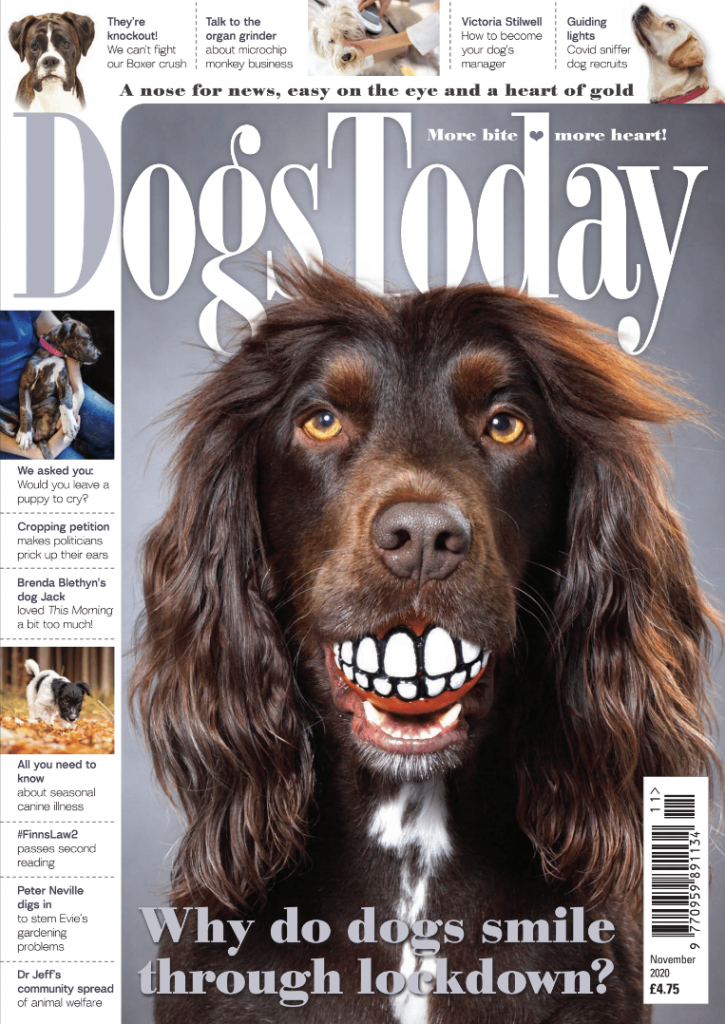 Dogs Today November 2020