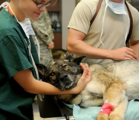 should pet owners be allowed in for vet visits on lockdown?