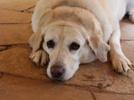 Pet owners may have to give up their pets in case of loss of income