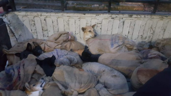 Dog meat trade in India