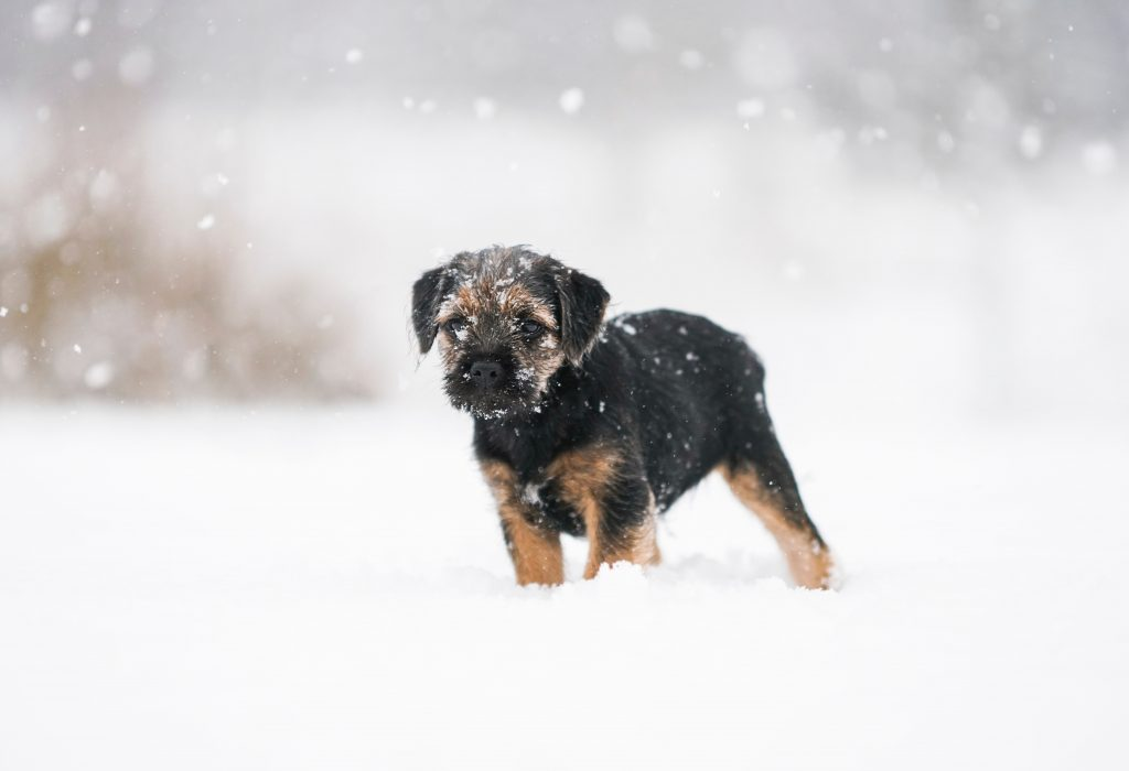 rescue dogs need help this Christmas