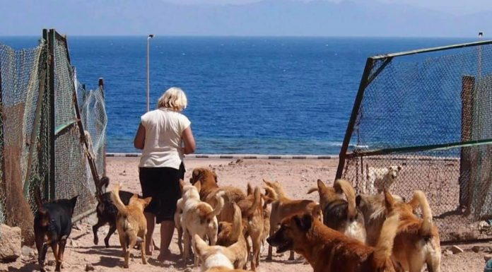 Janet and the dogs of Dahab
