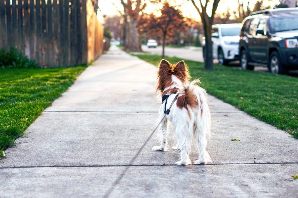 dog walking during lockdown