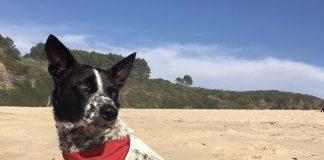 Sri Lanka rescue Daisy
