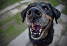 dental disease tops the list of issues in UK dogs
