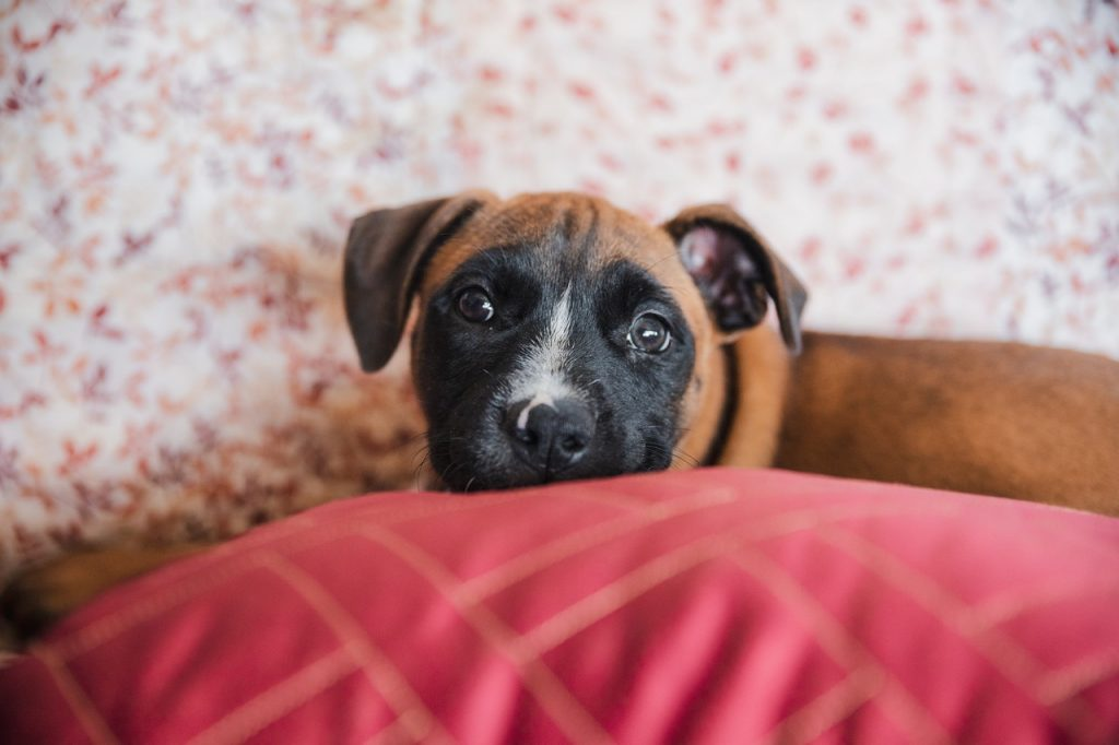 Rescue centres are struggling to care for pets during the pandemic