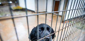 Befa the smuggled puppy