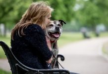 Domestic violence victims can escape with their pets