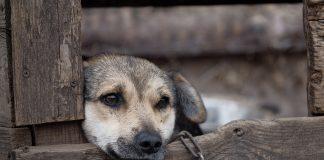 The animal cruelty bill will increase maximum custodial sentences tenfold