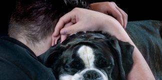pet theft tears families apart