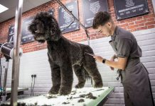 dog groomer corey lockwood