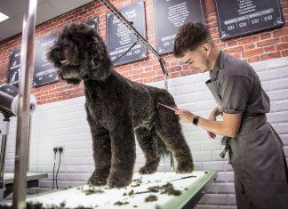 dog groomer corey lockwood