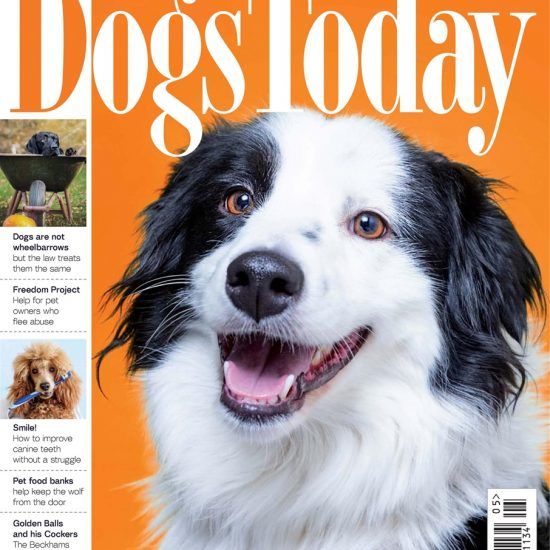 Dogs Today May 2021