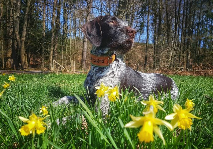 spring dangers